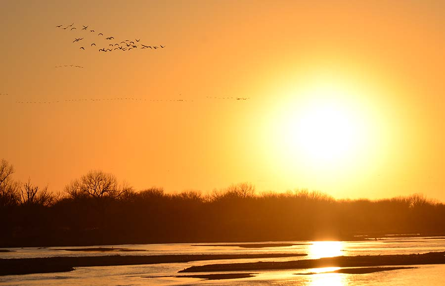 Post image for The Sand Hill Crane Migration: They're Coming!